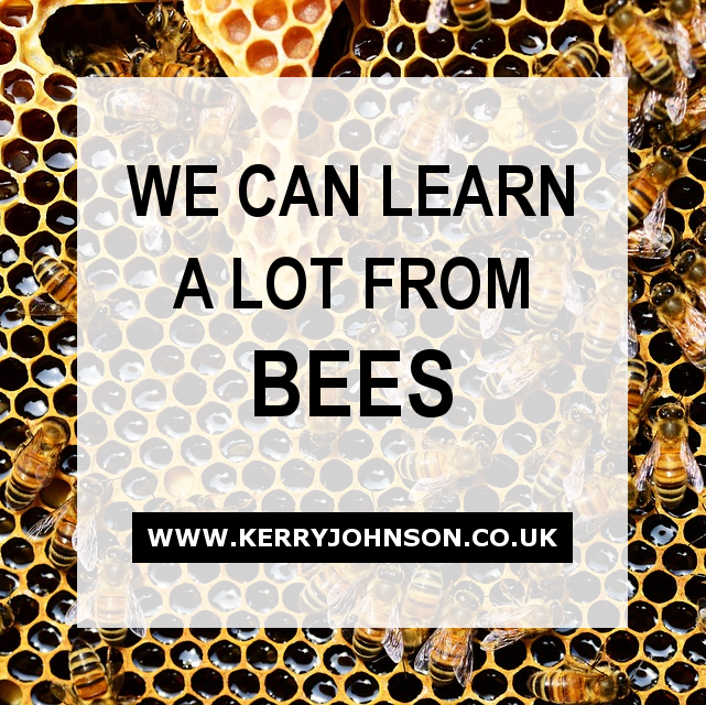 We Can Learn a Lot From Bees